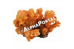 .Akvárium dekor ágas korall 12cm  TRX8838  Kiegészítő felszerelés akváriumba. Anyaga: kerámia, műanyag